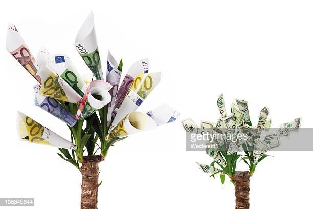 plant with flowers made from euro and dollar notes against white background - money tree stock photos and pictures