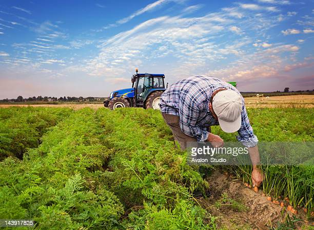 plantation carrots - tractor stock pictures, royalty-free photos & images