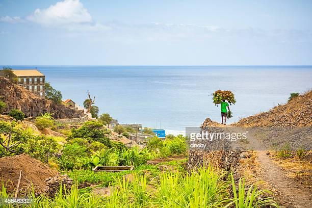 Plantation du Cap-vert