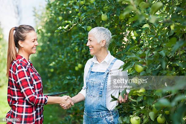 Plantation of granny smith apple