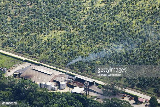 Plantation of Palm Trees for Palm Oil Production on January 13 2017 in Villavicencio Colombia