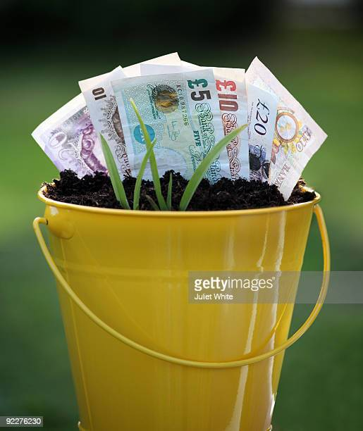 Planted Pound Notes and Green Shoots