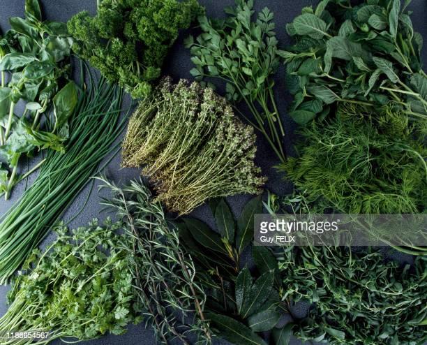 Plantes aromatiques et médicinales : ciboulette, persil, thym, menthe, aneth, romarin, laurier, coriandre, France, circa 1980.