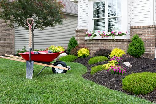 Planting a celosia flower garden around a house 507450431