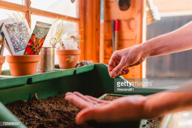 Planting and sowing seeds