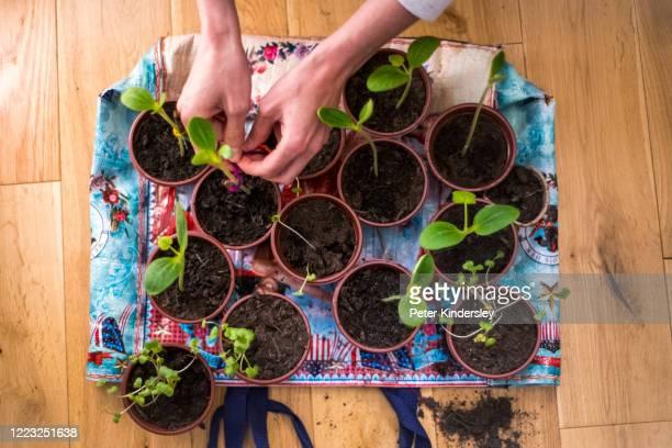 Planting at Home