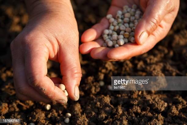 プランティング豆