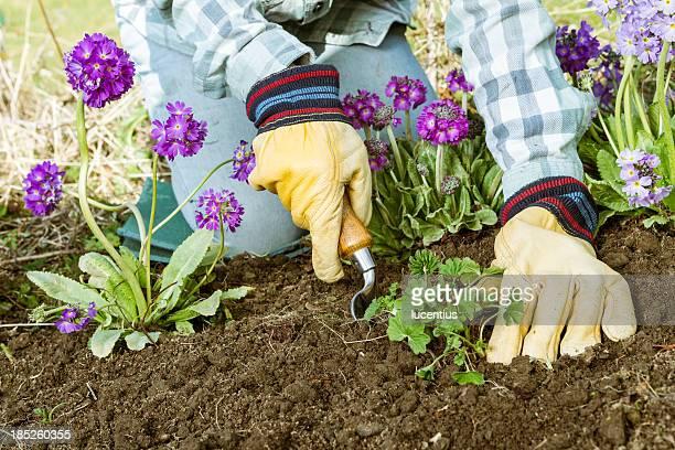 Planter dans le jardin