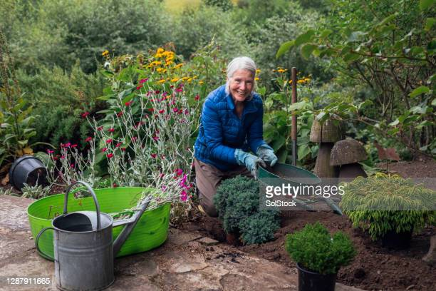 planting my new tree - biodiversity stock pictures, royalty-free photos & images