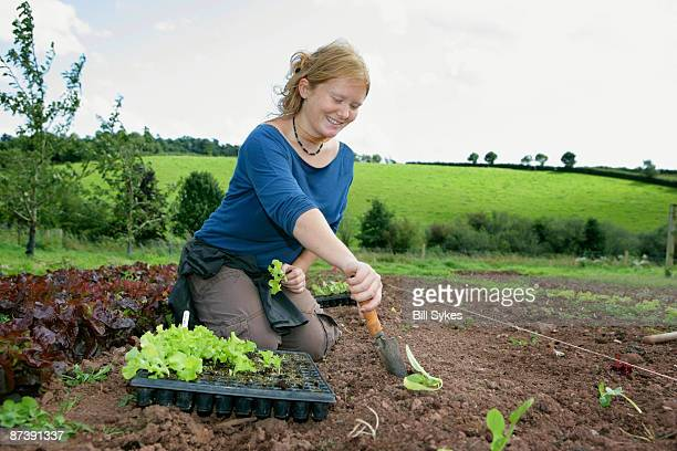 planting organic lettuces - kneeling stock pictures, royalty-free photos & images