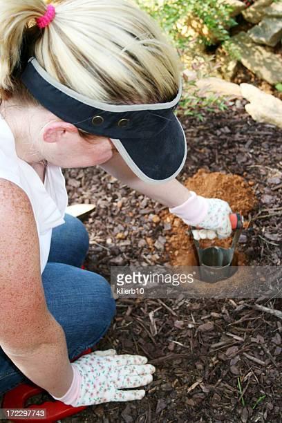 pflanzen - blumenzwiebel stock-fotos und bilder