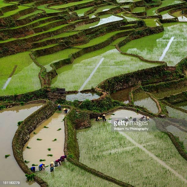 Planting season in Yuanyang