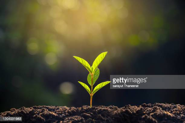 planting seedlings young plant in the morning light on nature background - seedling stock pictures, royalty-free photos & images