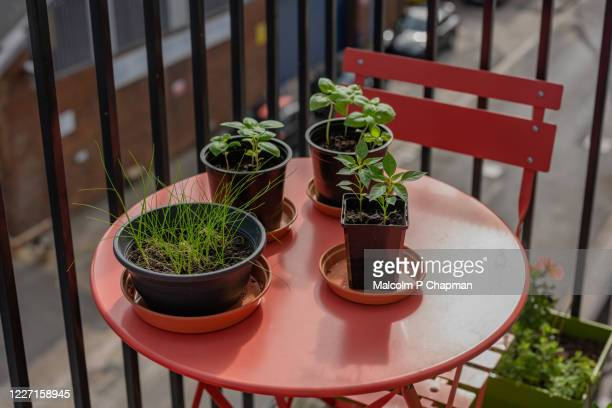planting seeds and gardening on apartment balcony during lockdown - chair stock pictures, royalty-free photos & images