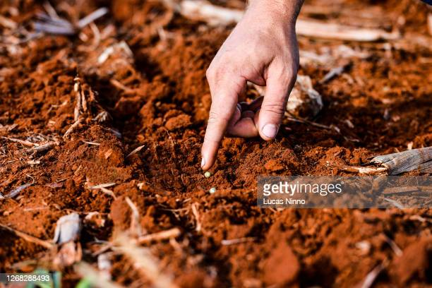 planting soybean - brazil stock pictures, royalty-free photos & images