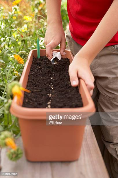 Planting spinach seeds, close up