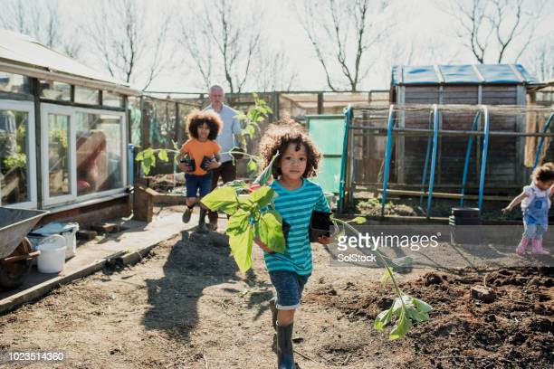 planting sunflowers at the allotment - vanguardians stock pictures, royalty-free photos & images
