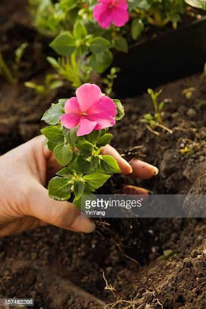 Planter le jardin au printemps dans le Vermont