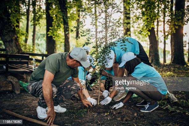 planting tree in public park - planting stock pictures, royalty-free photos & images