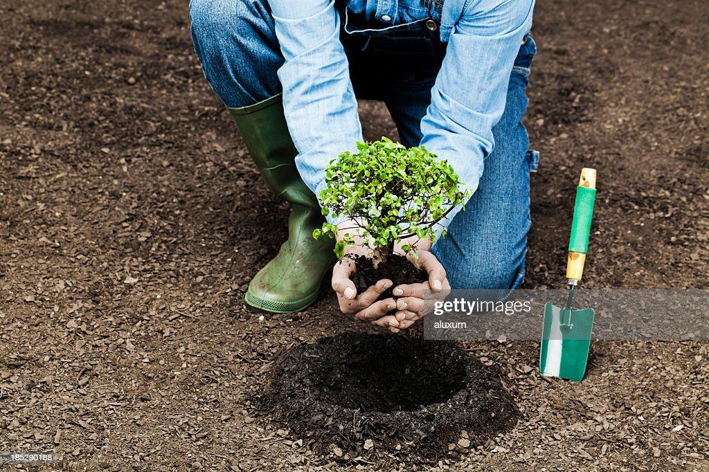 Planting tree : Stock Photo