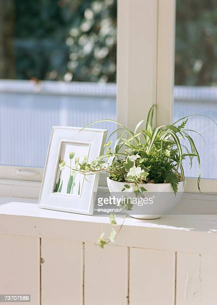 Plants and a photo frame
