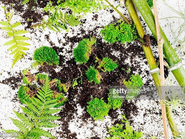 Plants and soil on pure white ground