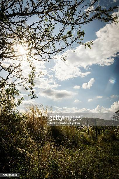 Plants And Tree On Field Against Sky On Sunny Day