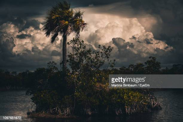 plants and trees against sky during sunset - gulf coast states stock pictures, royalty-free photos & images
