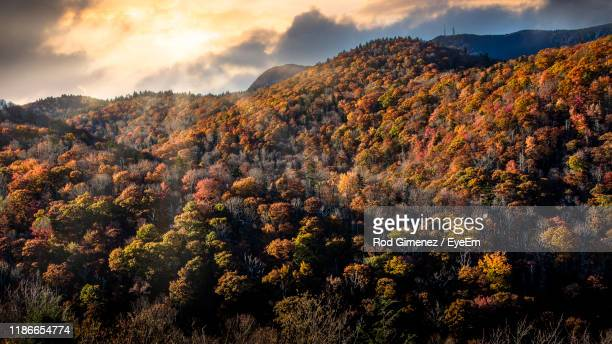 plants and trees against sky during sunset - asheville stock pictures, royalty-free photos & images
