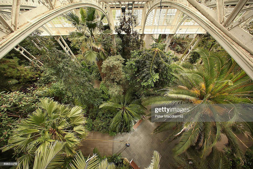 Plants And Trees Are Watered In The Temperate House At The Royal Botanic  Gardens, Kew