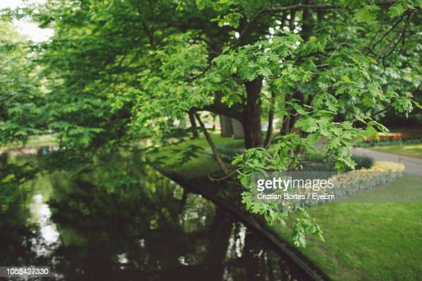 plants and trees by canal in park - bortes stock pictures, royalty-free photos & images
