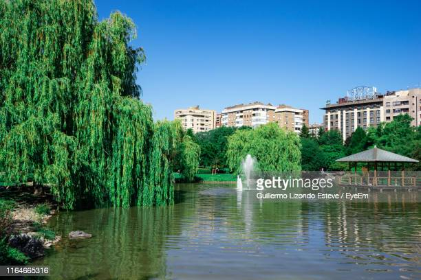 plants and trees by lake against clear blue sky - pamplona stock pictures, royalty-free photos & images