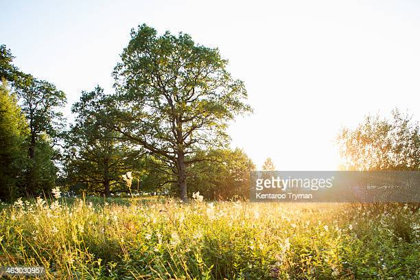 plants and trees growing in field during summer - non urban scene stock pictures, royalty-free photos & images