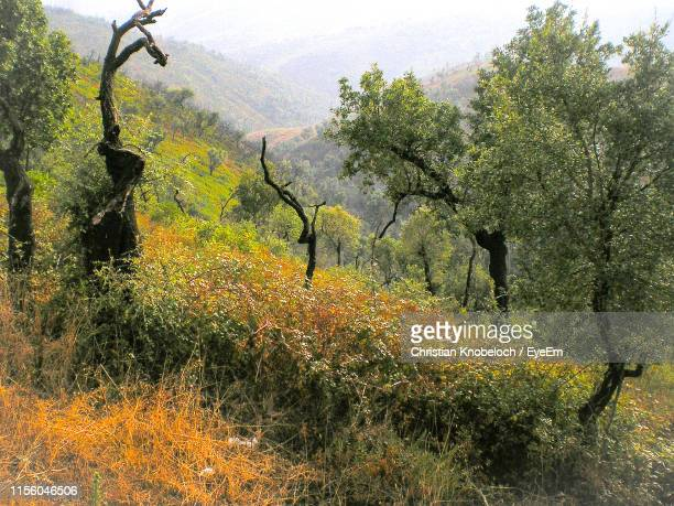 plants and trees in forest during autumn - monchique stock pictures, royalty-free photos & images