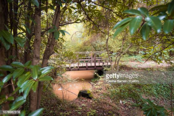 plants and trees in forest - shreveport stock pictures, royalty-free photos & images