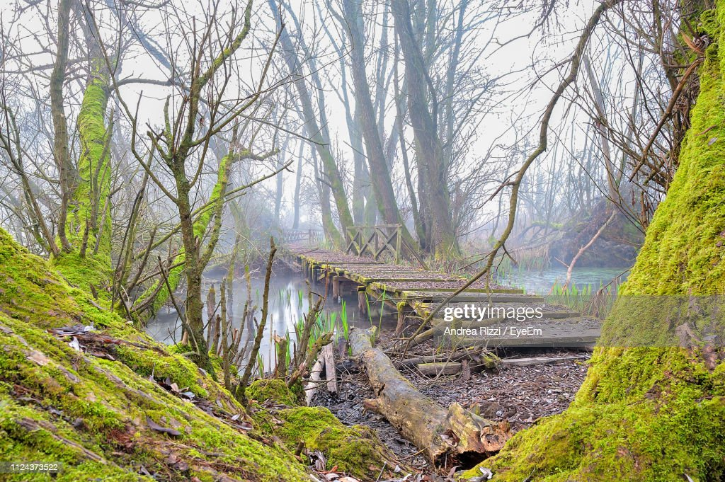 Plants And Trees In Forest : Foto stock
