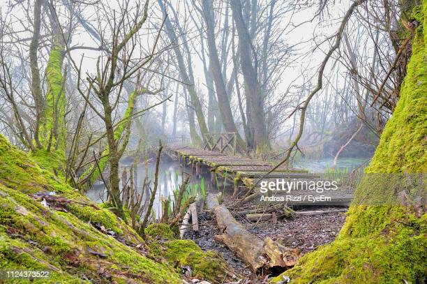 plants and trees in forest - andrea rizzi stockfoto's en -beelden
