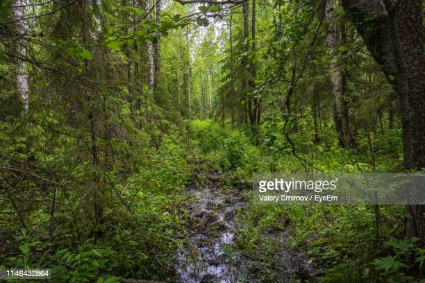 plants and trees in forest - russia stock pictures, royalty-free photos & images