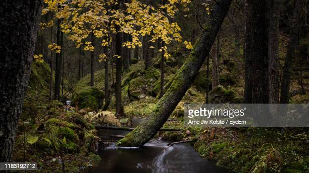 plants and trees in forest - arne jw kolstø stock pictures, royalty-free photos & images