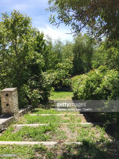 plants and trees in park - alpes de haute provence stock pictures, royalty-free photos & images
