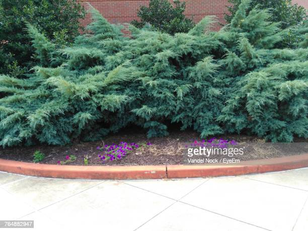 plants and trees in park - princess anne princess royal photos stock pictures, royalty-free photos & images