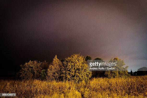 plants and trees on field against cloudy sky at dusk - andres ruffo stock pictures, royalty-free photos & images