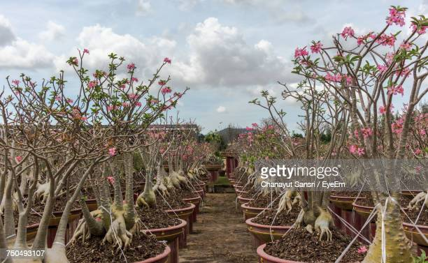 plants and trees on field against sky - chanayut stock photos and pictures