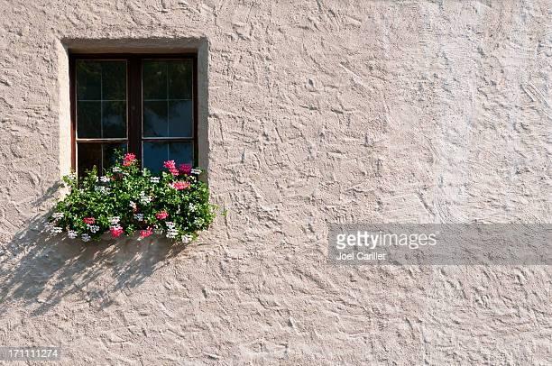植物とウィンドウ - 化粧しっくい ストックフォトと画像