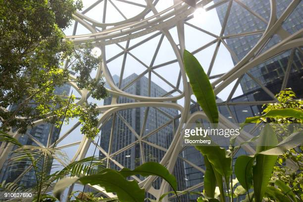 Plants are seen inside the Amazoncom Inc Spheres in Seattle Washington US on Tuesday Jan 23 2018 The online retailer is scheduled to unveil the...