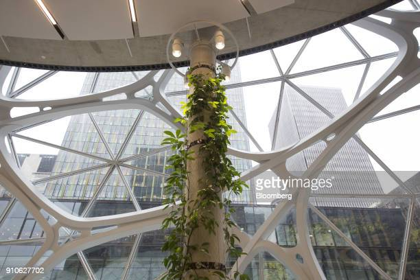 Plants are seen on a pole inside the Amazoncom Inc Spheres in Seattle Washington US on Tuesday Jan 23 2018 The online retailer is scheduled to unveil...