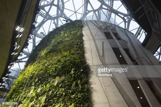 Plants are seen on a wall inside the Amazoncom Inc Spheres in Seattle Washington US on Tuesday Jan 23 2018 The online retailer is scheduled to unveil...