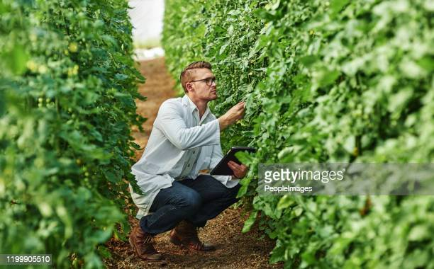plants are truly fascinating organisms - agronomist stock pictures, royalty-free photos & images