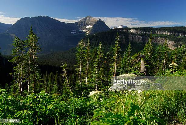 plants at glacier national park - los glaciares national park stock pictures, royalty-free photos & images