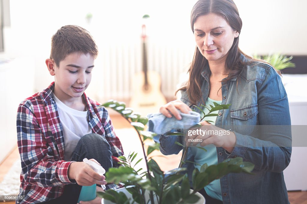Plants at home : Stock Photo